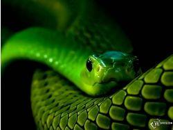 Обои на рабочий стол год змеи
