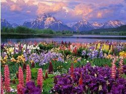 Картинки пейзажи с цветами красивые