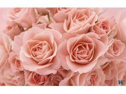 Красивые картинки цветов розы рисовать