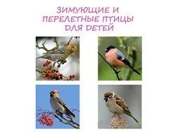 Картинки птиц для детей с названиями