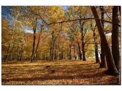 Осень картинки на рабочий стол скачать бесплатно