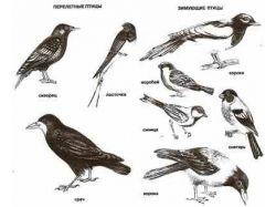 Картинки перелётных птиц для детей