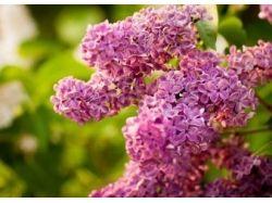 Красивые картинки на телефон весны
