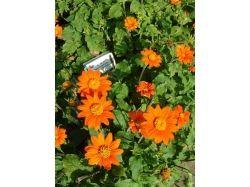 Цветы оранжевые фото