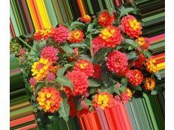 Посмотреть картинки и фото самых красивых цветов в мире