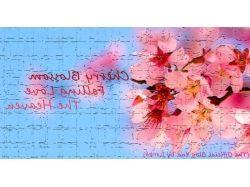 Посмотреть картинки и фото самых красивых цветов в мире 2