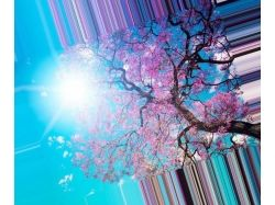 Посмотреть картинки и фото самых красивых цветов в мире 5