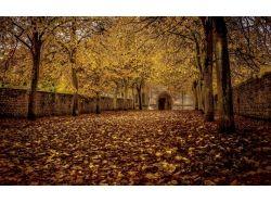 Картинки осень лес