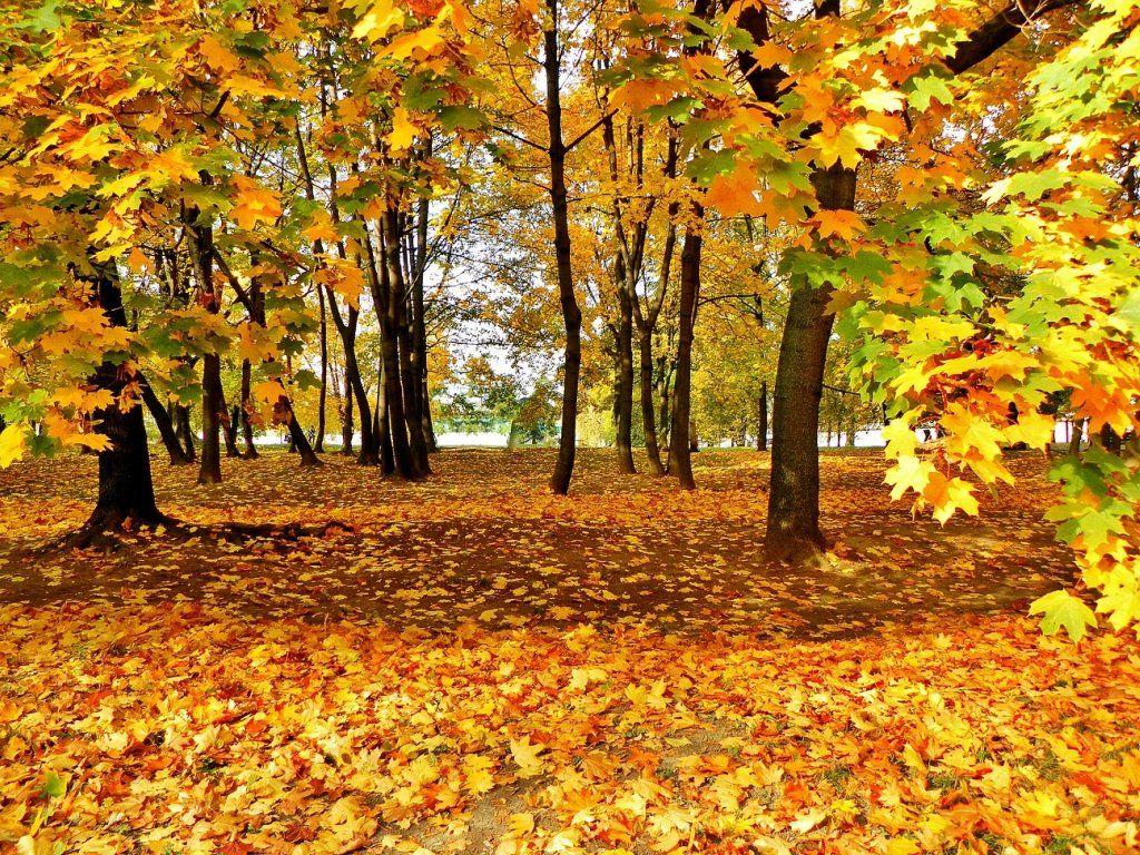 Аппликации на тему осень фото » Скачать лучшие картинки ...