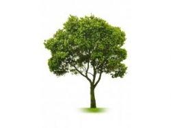 Картинка для детей чудо дерево