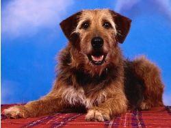 Красивые картинки щенков и собак