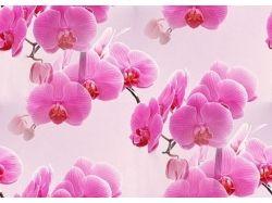 Обои на рабочий стол орхидеи
