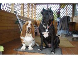 Разные фотографии собак