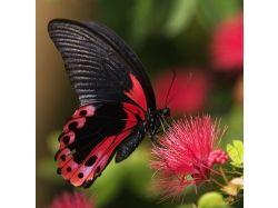 Красивая бабочка картинки рисованные