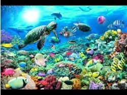 Видео подводный мир для детей