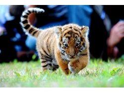 Самые красивые картинки про животных