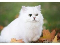 Самые красивые картинки про животных 3