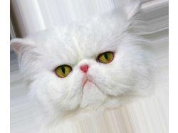 Самые красивые картинки про животных 4