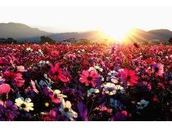 Фото цветы и солнце
