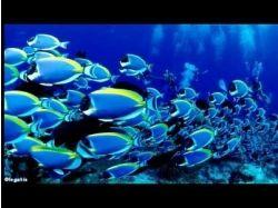 Играть онлайн бесплатно подводный мир