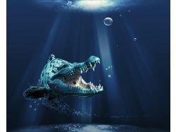 Картинки животные морские