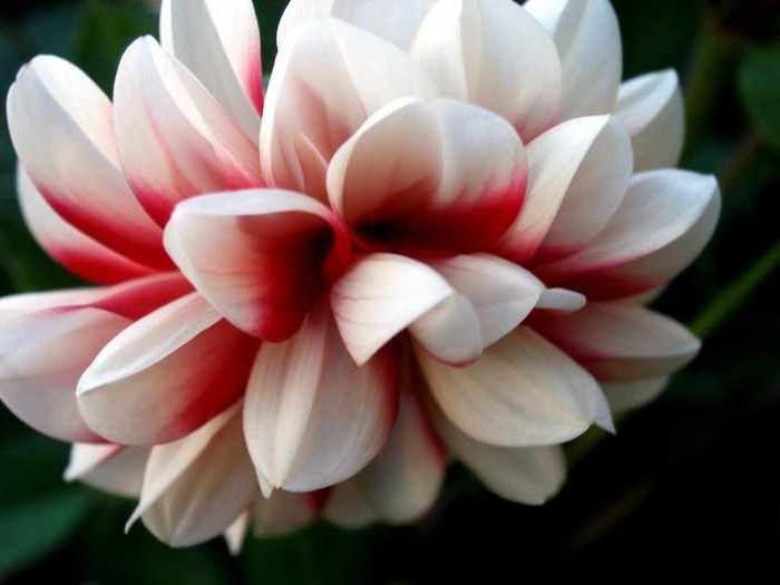 Названия цветков