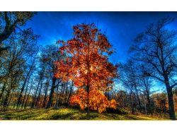 Осень парк фото