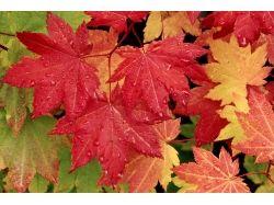 Осень цветы фото