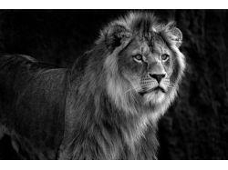 Животные картинки черно белые