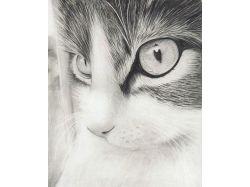 Рисунки карандашом природа и животные