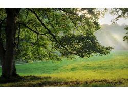 Красивое дерево картинки