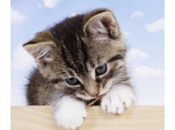Красивые картинки котят и щенков