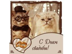 Картинки с днем свадьбы смешные