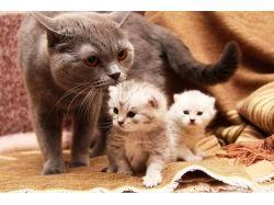 Фото котят прикольные