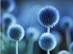 Разные растения фото