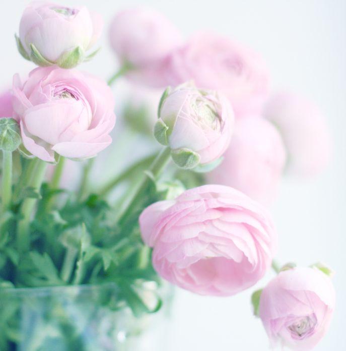 картинка нежные цветы