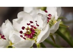 Фото цветы макро