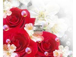 Скачать бесплатно картинки цветы розы