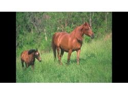 Обои на комп лошади