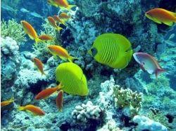 Видео подводный мир красного моря