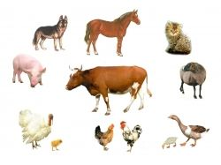 Домашние животные картинки для детей раскраски