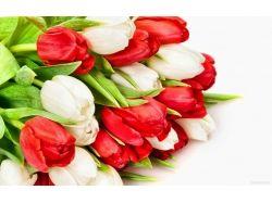 Красивые тюльпаны картинки