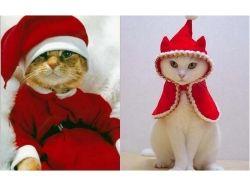 Картинки праздничные красивые