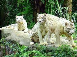 Красивые картинки с животными и природой
