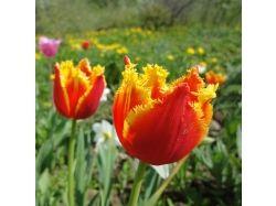 Самые красивые картинки цветы