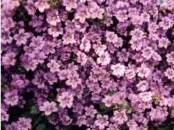 Wallpaper screensaver flowers