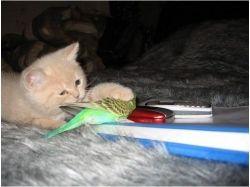 Прикольные фотографии кошек