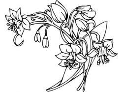 Черно белые рисунки цветы