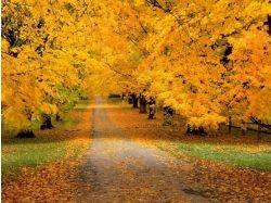 Осень фоновые рисунки