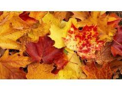 Осень фоновые рисунки 5